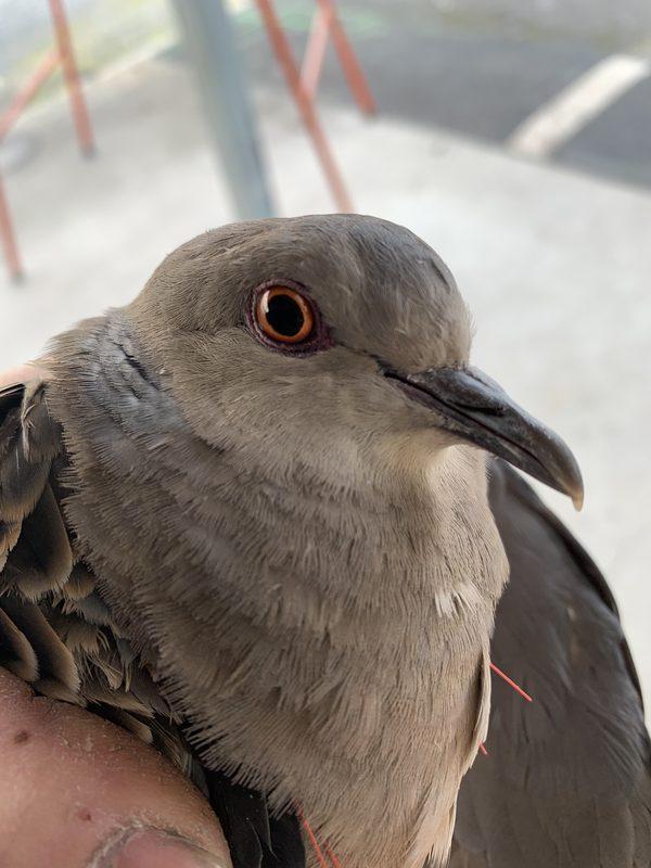 鳩(´・ω・`)
